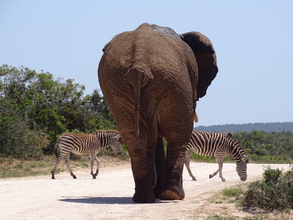 Mijn favoriete bestemming is Zuid-Afrika