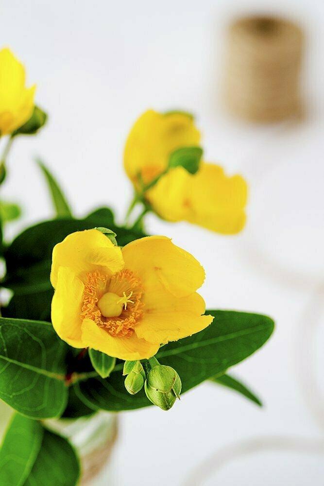 geel bloemetje