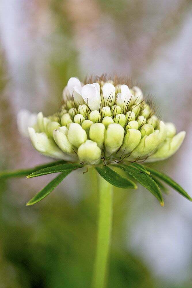 bloemetje ElsaRblog