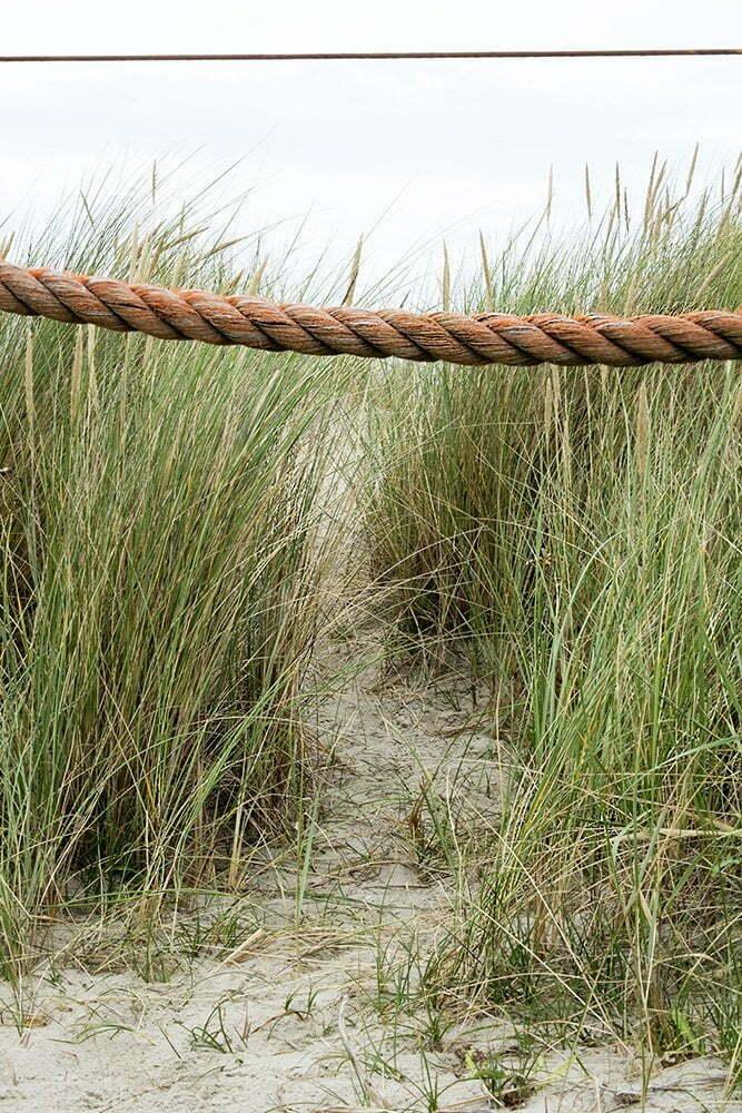 Texel: duinen met bijzondere kleuren