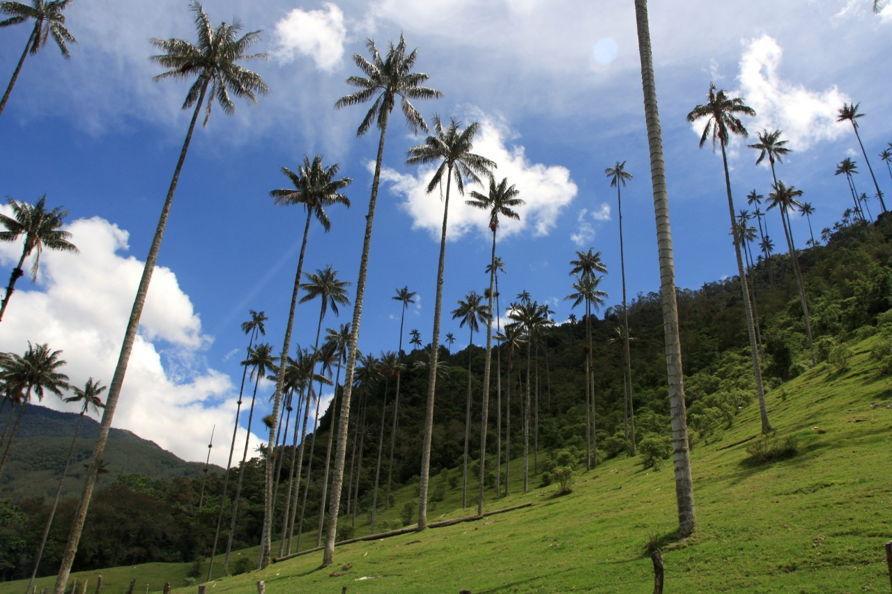 Valle de Cocora in Colombia.