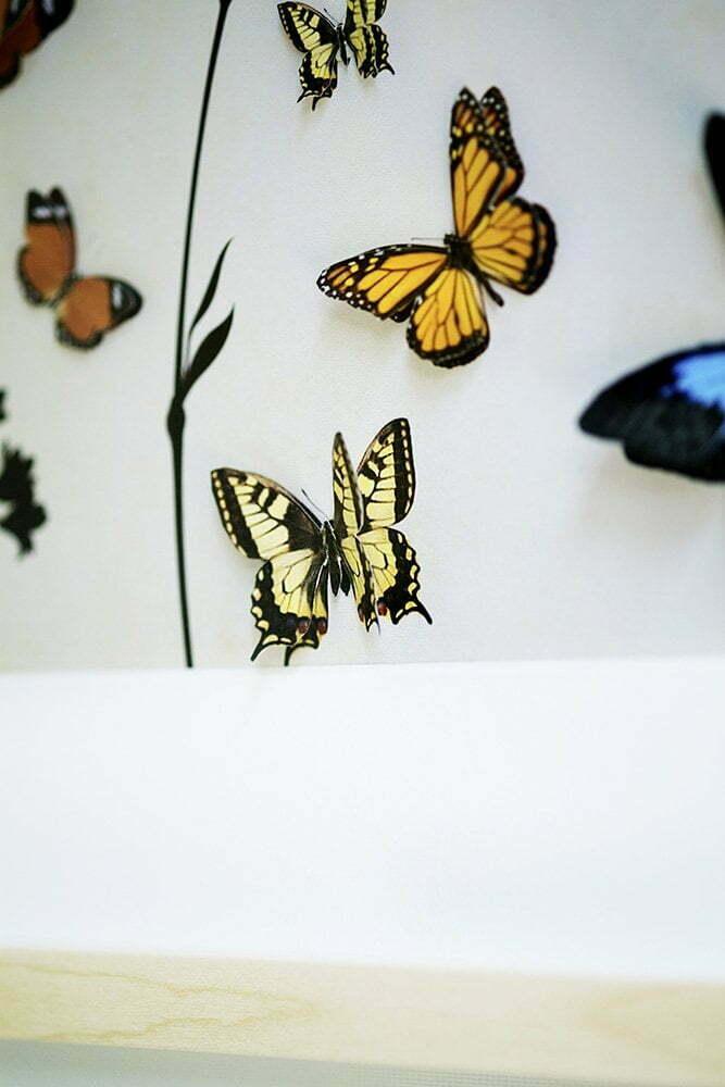 Ikea fotolijst Hovsta met vlinders - Free printable