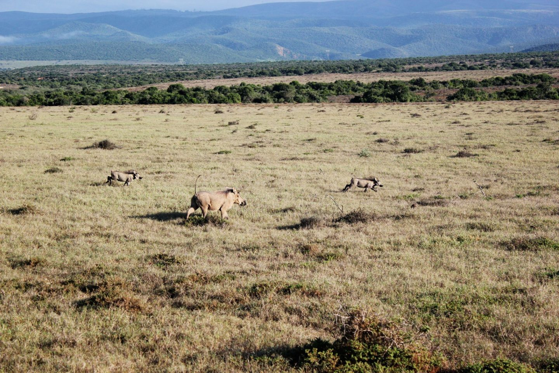 Zuid Afrika jorindeesthe