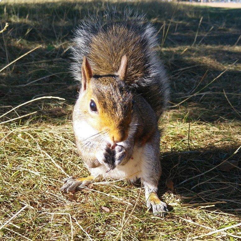 In het zonnetje; in Hyde park eekhoorntjes voeren uit mijn handen.