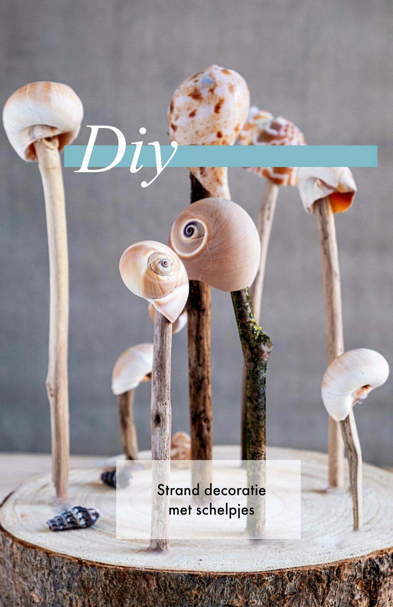 Pin Strand decoratie met schelpjes - Diy