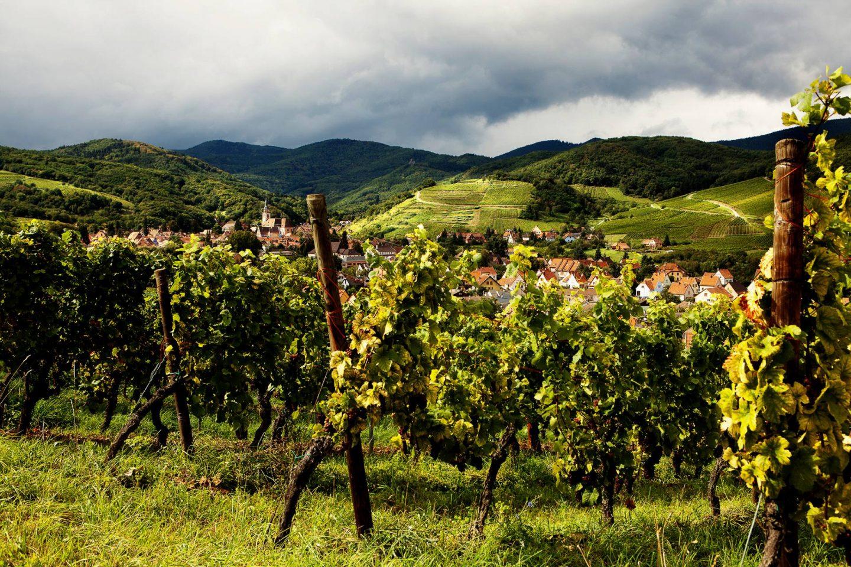 Elzas wijnen: Riesling en meer