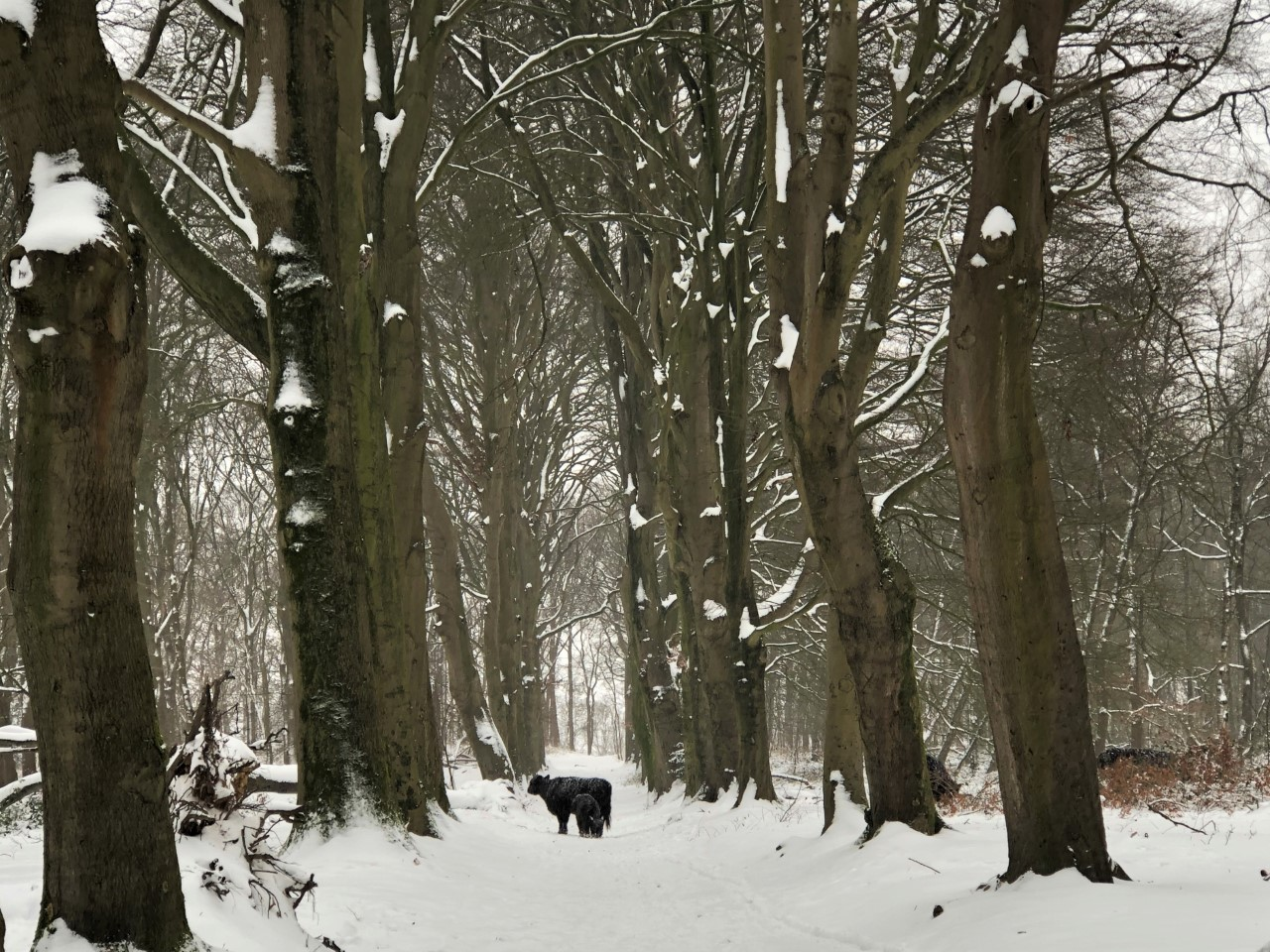 Utrechtse Heuvelrug; Grebbebos