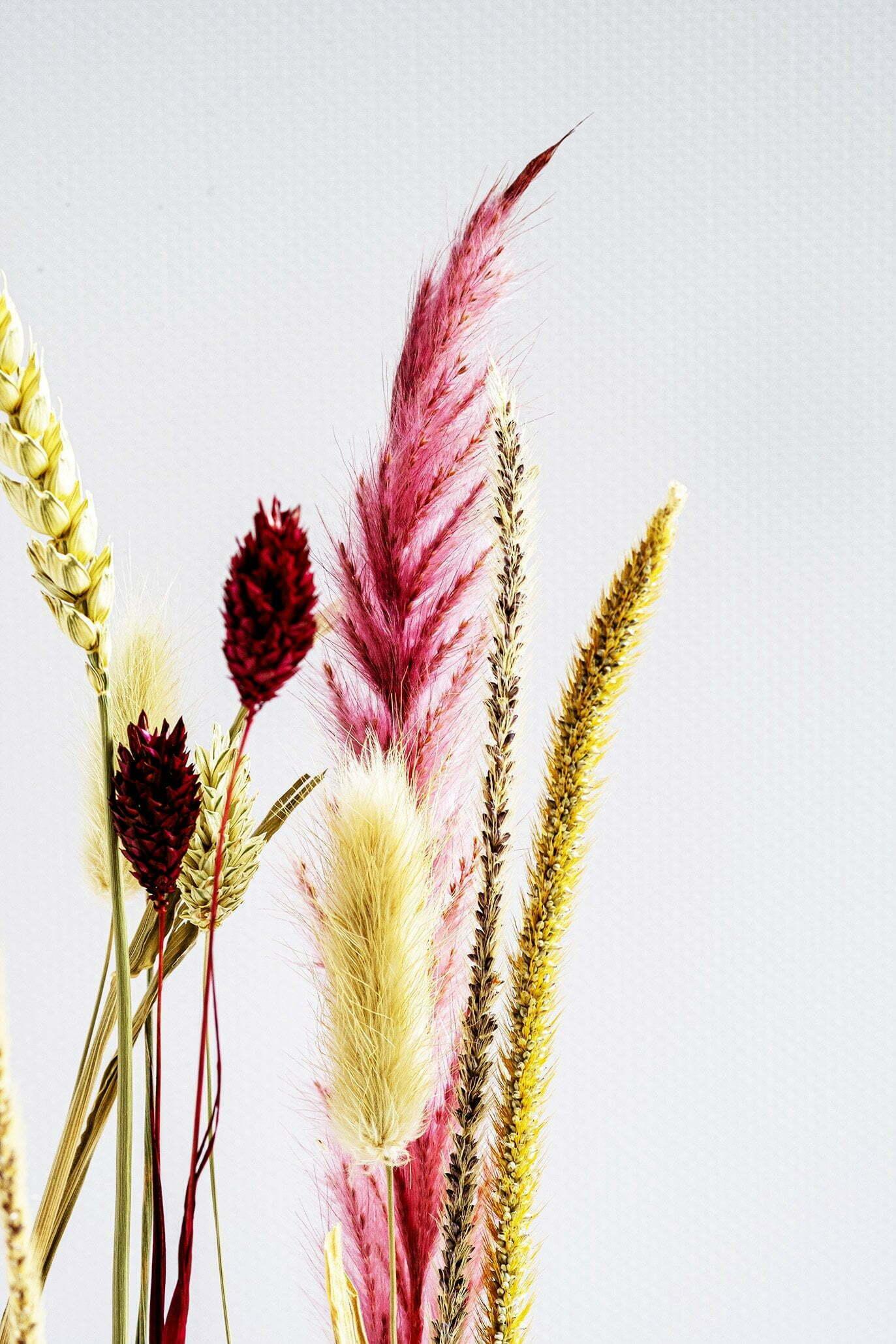 Verschillende gedroogde bloemen