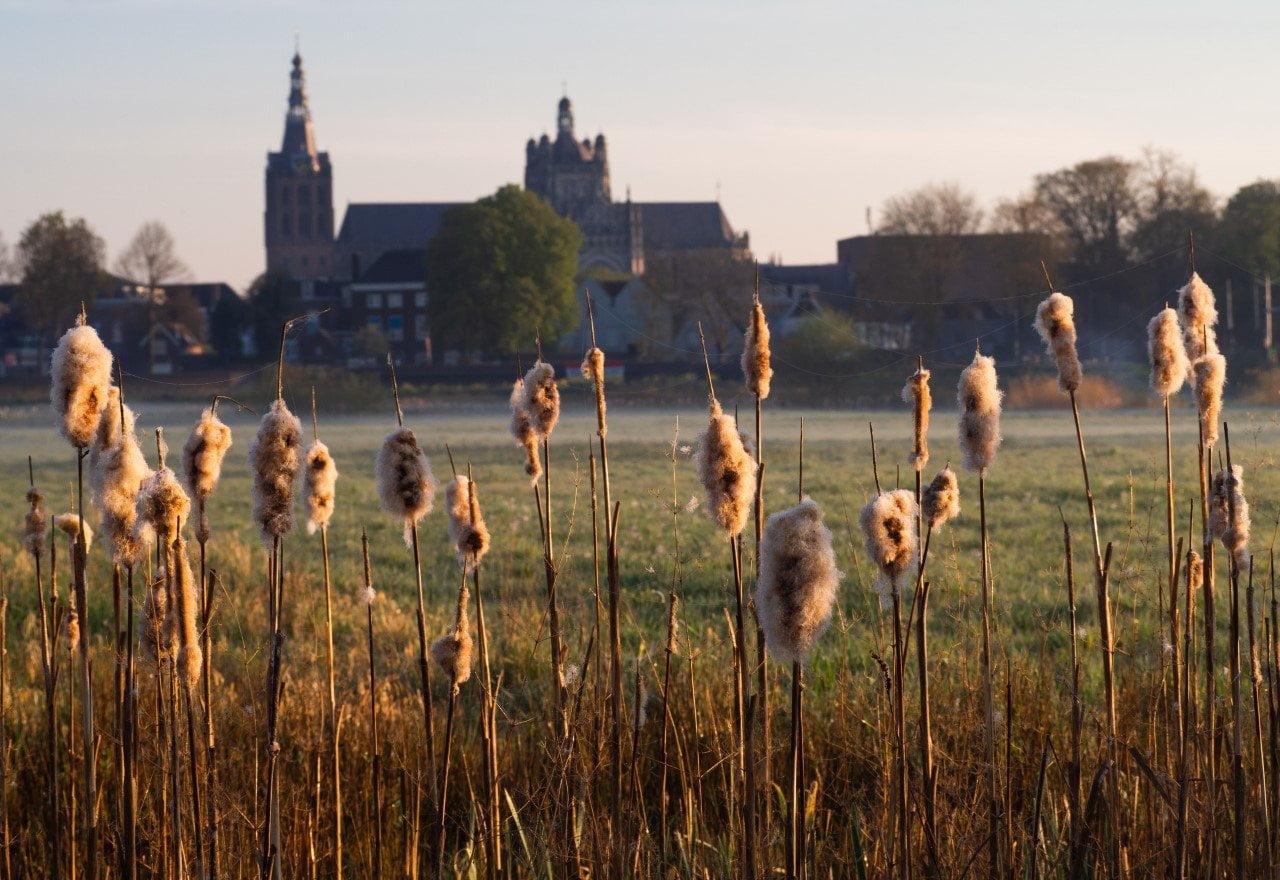 ik woon in 's-Hertogenbosch; Het Bossche Broek