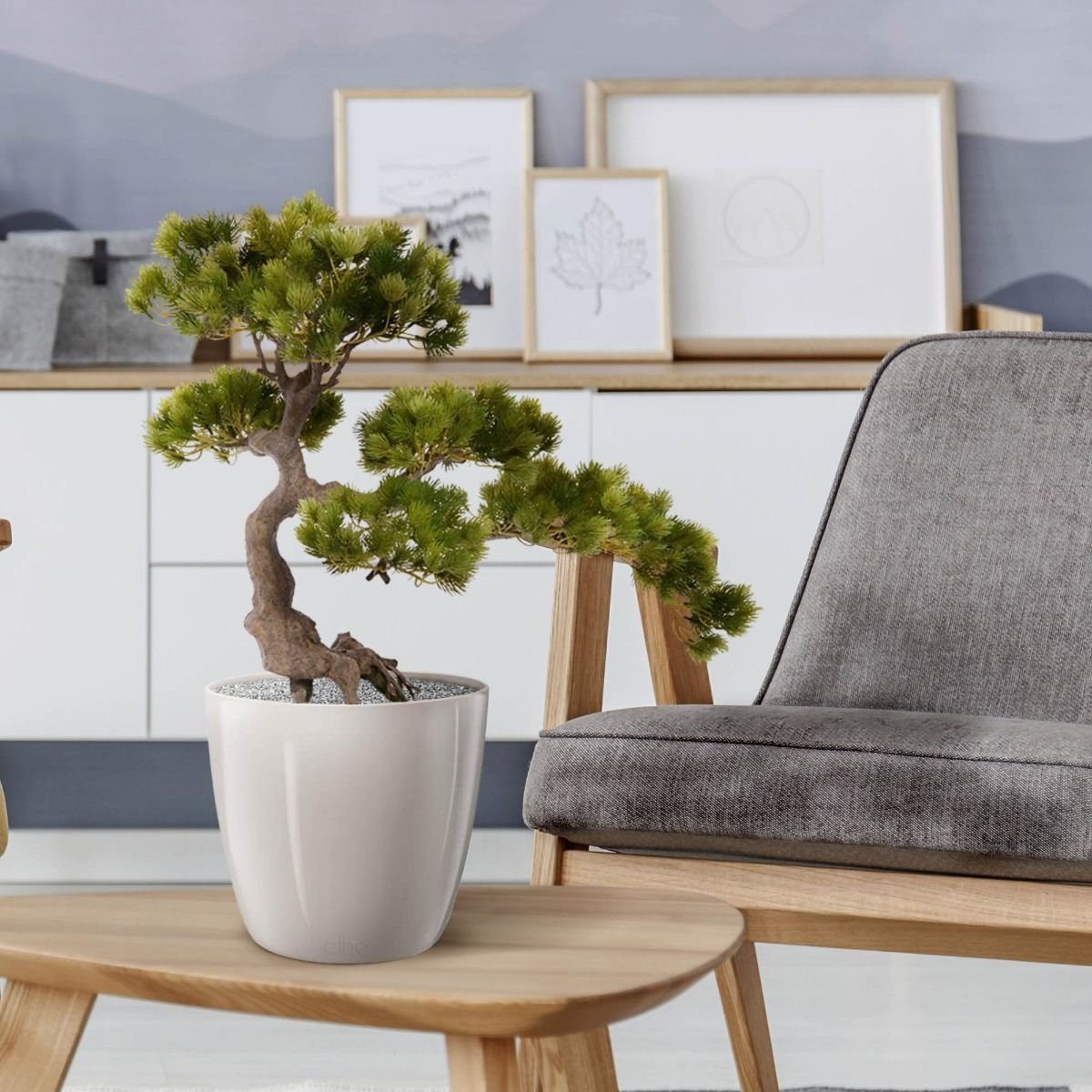 Pinus kunst bonsai: foto van Maxifleur
