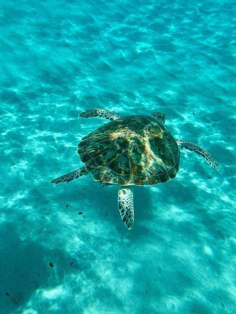 Onderwaterwereld van Curaçao